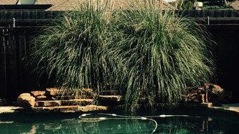 Pool bobcat family