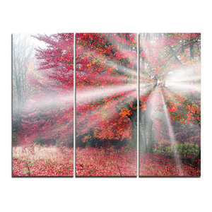 """""""Mystical Light in Red Fall Forest"""" Photo Wall Art, 3 Panels, 36""""x28"""""""