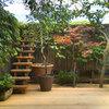 Вопрос: Можно ли вырастить полноценный сад в кадках
