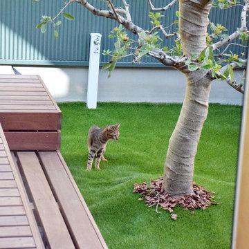 猫と暮らす中庭のある家