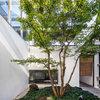 庭づくりの第一歩。シンボルツリーに適した樹木とは?