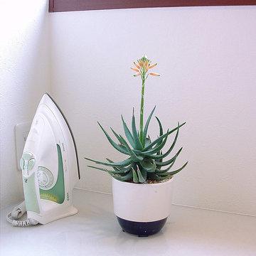 Plants.S