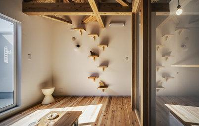 My Houzz:人間と猫が楽しく共存する、豊かな木の香りの家
