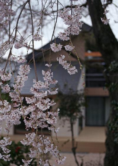 モダン 庭 by 設計事務所アーキプレイス