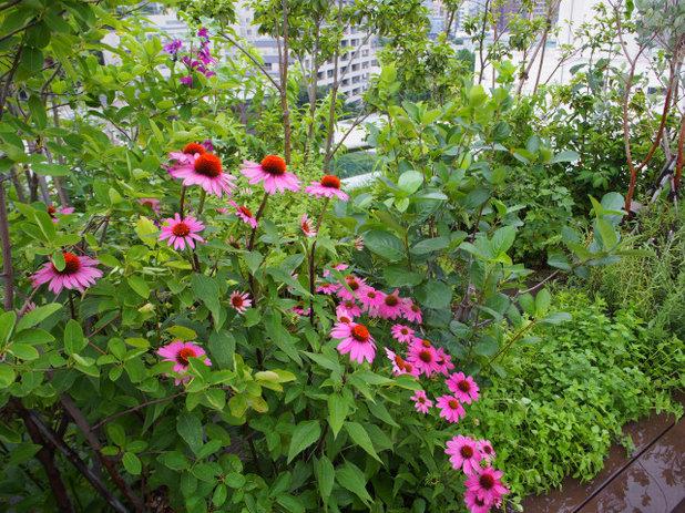 庭 by plantscape design SOU