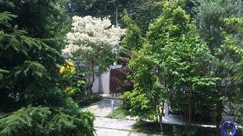 白い花のアプローチ