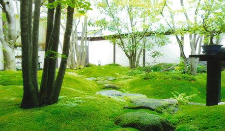 Innehalten: Eine Einführung in die Kunst des japanischen Teehausgartens