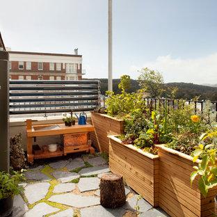 Balcony container garden - contemporary balcony container garden idea in San Francisco