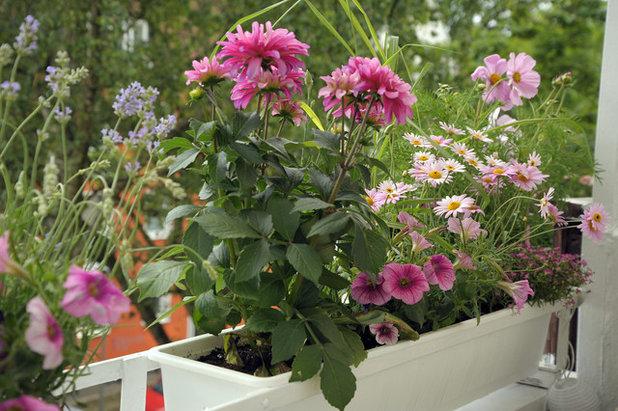 Die Besten Balkonpflanzen Und Wie Man Sie Hegt Und Pflegt Auswahl Balkonpflanzen Kombiniert