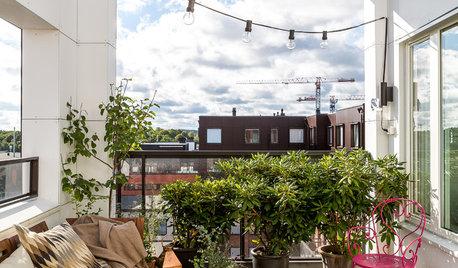 Expertfrågan: Vilka växter trivs i norrläge på altan och balkong?