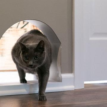 Basement Cat Door