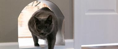 12 Idee Ingegnose E Creative Per Una Casa A Misura Di Gatto