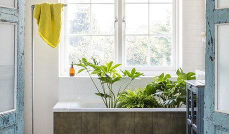 Quelles plantes pour la salle de bains ?