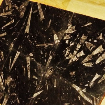 Ancient Seabed Natural Fossil Stone Collection Black (Kajal) Tiles