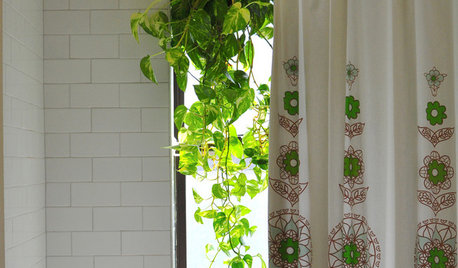 The Perfect Houseplant for People Who Kill Houseplants