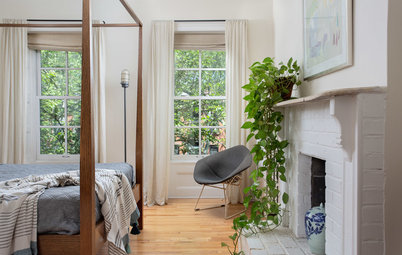 High-Impact Houseplants for First-Timers