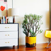 Decorating: 10 Creative New Uses for Leftover Materials