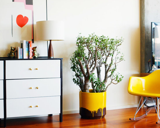 contemporary tall indoor plants | houzz