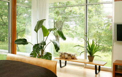 Create Your Own Shangri-la With Bird of Paradise Plants