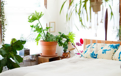 5 Ways to Tell How Much Water Your Indoor Plants Really Need
