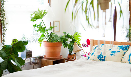 5 Ways to Tell How Much Water Your Houseplants Need