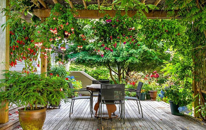 Take it Outside: Setting Up the Perfect Outdoor Office