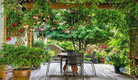Fuchsia Brightens Shady Gardens