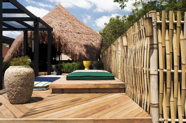cultiver le bambou mode d 39 emploi. Black Bedroom Furniture Sets. Home Design Ideas