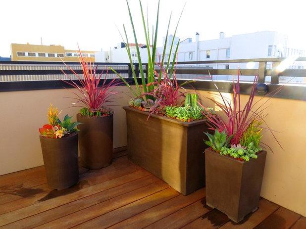 Modern Deck by Duviv Gardens Inc.