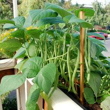 [COPY] 15 Favorites for Your Summer Edible Garden