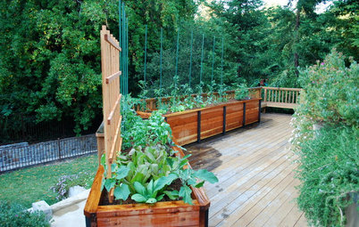 Kick-Start Your Vegetable Garden This Winter