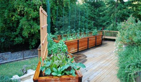 Kick-Start Your Vegetable Garden This Winter