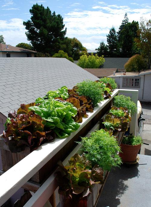 die besten pflanzen f r einen schattigen balkon. Black Bedroom Furniture Sets. Home Design Ideas