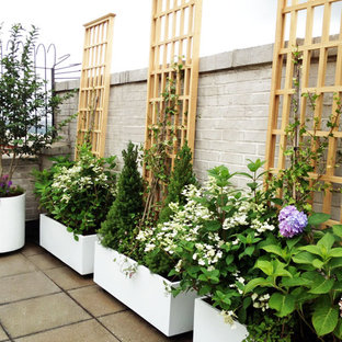 Immagine di una terrazza contemporanea sul tetto con un giardino in vaso