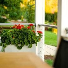 Great Design Plant: Geranium