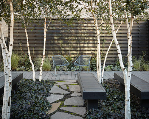 Outdoor patio furniture shade - Best Birch Trees Design Ideas Amp Remodel Pictures Houzz