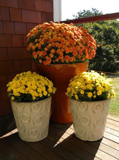 8 tolle herbstblumen f r garten und balkon. Black Bedroom Furniture Sets. Home Design Ideas