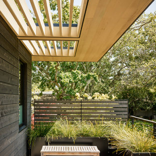 This is an example of a modern deck in San Francisco with a container garden.