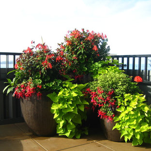 Design ideas for a small tropical rooftop deck in Seattle with a container garden and no cover.