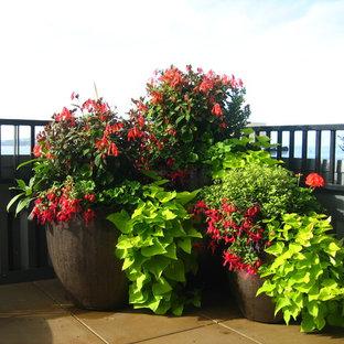 Idee per una piccola terrazza tropicale sul tetto con un giardino in vaso e nessuna copertura