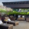 Pregunta al experto: 7 plantas que harán de la terraza un oasis