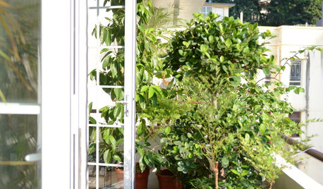How to Grow Edibles on Your Balcony