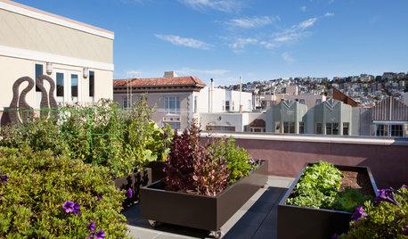 Cultivar en la ciudad: Cómo montar un huerto urbano paso a paso