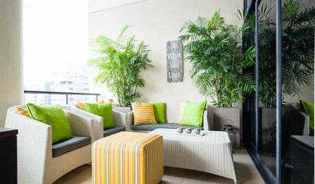 5 Best Plants to Grow in a Balcony