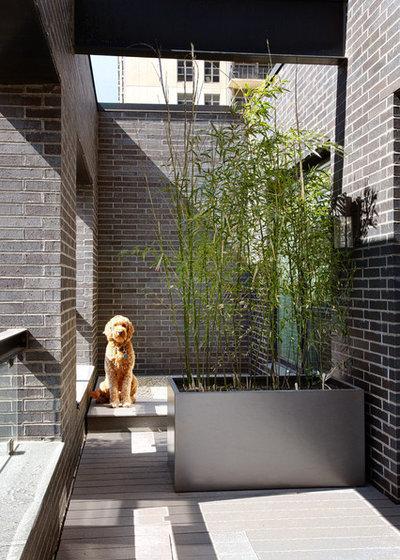 Contemporain Terrasse en Bois by Morgante Wilson Architects