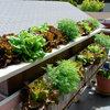 プランターで野菜やハーブを育てる10のコツ