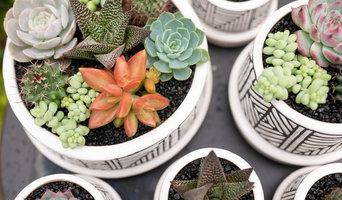 Custom Succulent Bowls