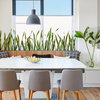 How to Tell if Your Houseplant Needs Water