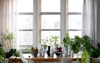 日当たりの悪い部屋でも楽しめる植物・グリーンは?
