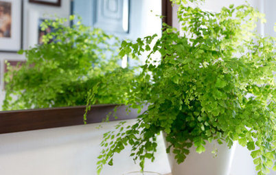Indoor Plant Profile: Maidenhair Fern